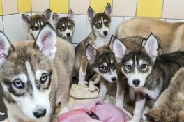 Het loopt storm voor gedumpte puppy's: 'Ze krijgen allemaal snel een nieuw thuis'