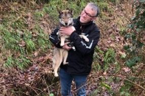 Hondje Mizuki weer gevonden door opgeluchte familie