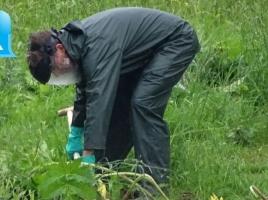 Berenklauw ontdekt in Rheden, de plant waar je blind van kan worden